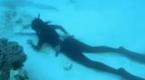 美女捕鱼能手憋气近5分钟咬死章鱼