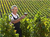 寻找法国各地最具特色美酒