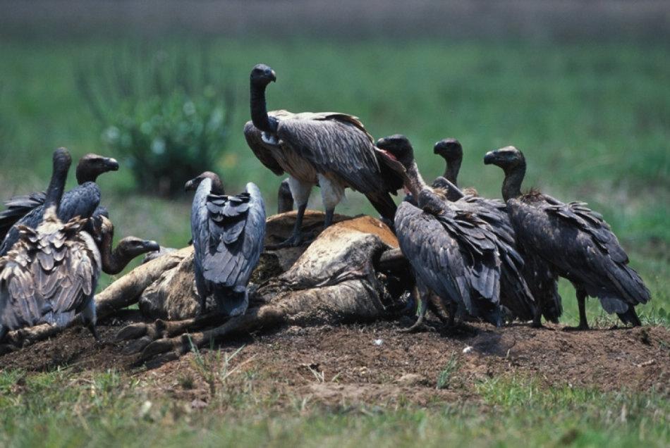 濒临灭绝的亚洲珍稀动物
