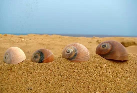 翡翠岛东,北,西三面由渤海和七里海环绕(泻湖),是一座由金黄色细沙