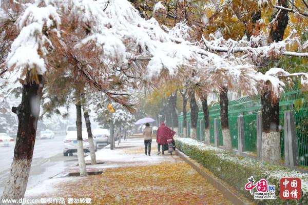 日降雪将持续到夜间 雪景图大集合 组图