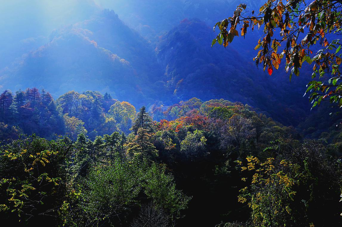 【七律 秦岭】和梅雨潇潇 - 一掬茗香 - 一掬茗香的博客