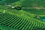 现代生态农业