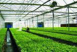 有机农业,生态农业