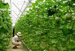 山东5000万支持生态农业和新能源示范县项目
