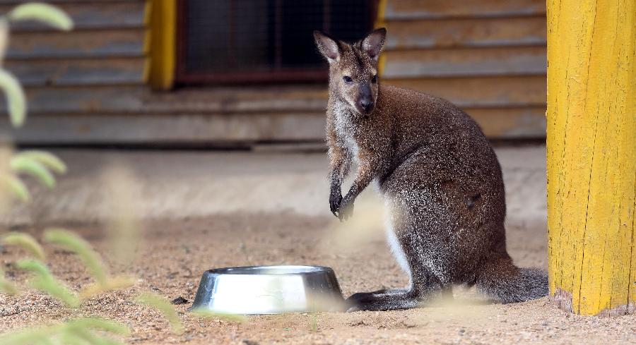 (8月23日摄).近日,沈阳森林动物园新引进了一些小动物,这些