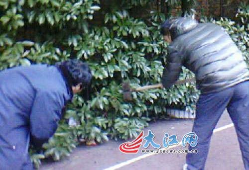 南昌/南昌十四中保安和老师正在寻找闯进校园的野猪