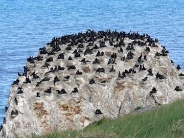 西边小岛叫海西山,又叫小西山,也叫蛋岛;东边的大岛叫海西皮.
