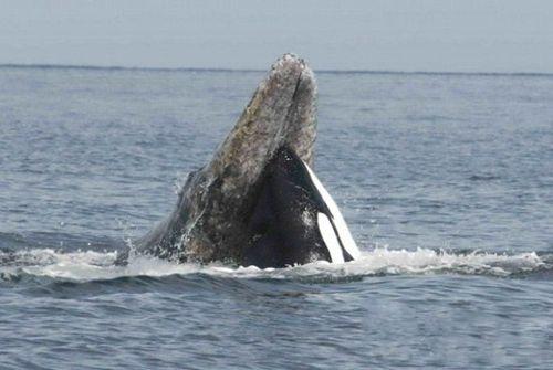 秘全球最适合观鲸的地方