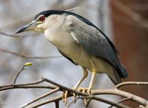 南京红山森林动物园的鹤园被安置在园内的西北角的山边,园内有小池塘