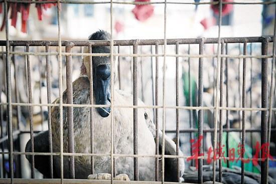 广东家禽批发市场生意受到一定的影响 记者 艾修煜 摄