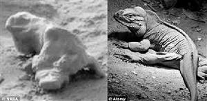 """快来看这些""""火星蜥蜴"""""""