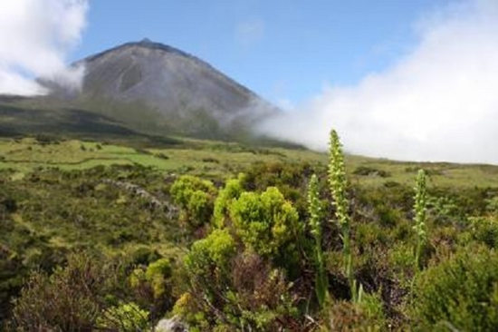 亚速尔群岛上生长着众多兰花物种。