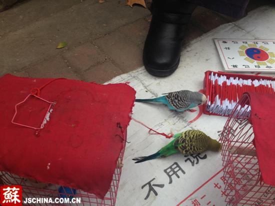 """""""神鸟""""从红盒子中叼出求签者的生日。"""
