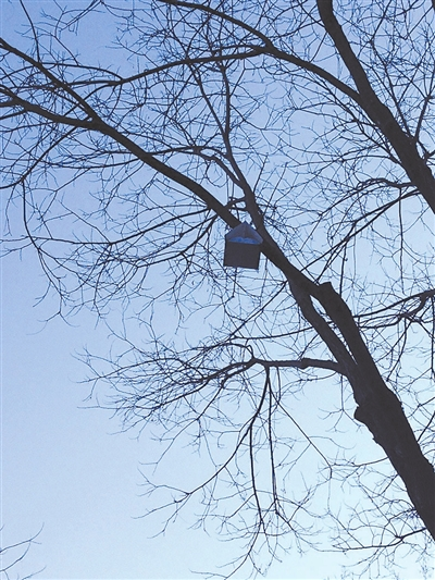 折树的步骤图解