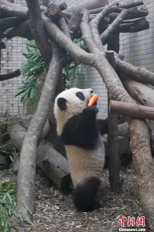 台北动物园披露有趣照片|宝宝|哭闹