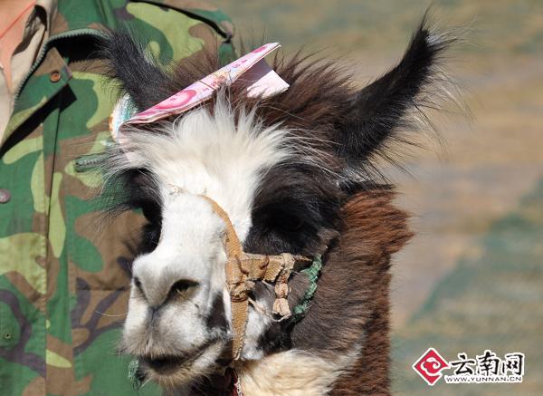 马年征集梦想 来云南野生动物园圆梦(图)