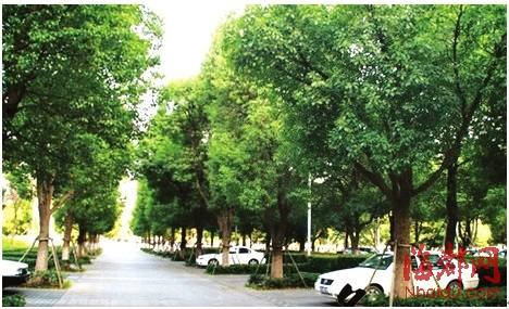 绿荫停车场绿化效果图