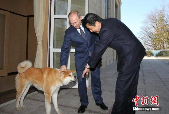 当地时间2014年2月8日,俄罗斯索契,俄罗斯总统普京会晤到访的日本首相安倍晋三。安倍晋三7日出席了索契冬奥会开幕式。图片来源:CFP视觉中国