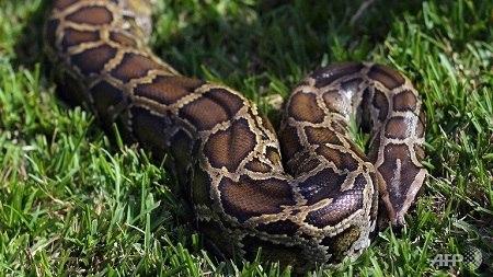 花于蛇零全集在线观看