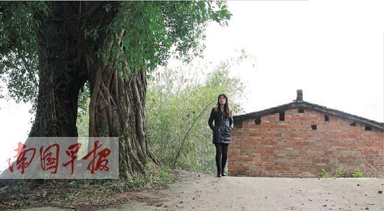 村头的大榕树一直在刘女士儿时的记忆里。