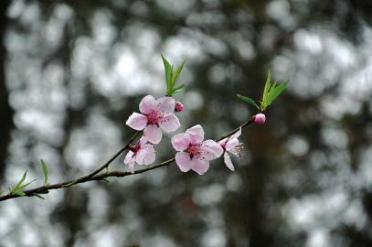 五瓣桃花折纸步骤视频图解