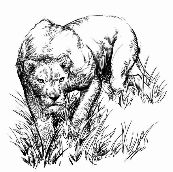 猎豹手绘图案大全