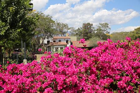 绿树红花的科利马市