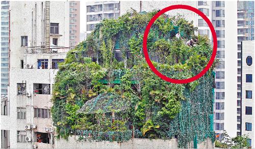 平面图 墙 植物
