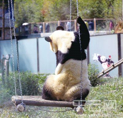 14日,云南野生动物园为思嘉安装了电视,秋千等户外娱乐设施,自从生活