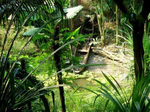 马达加斯加阿钦安阿纳雨林