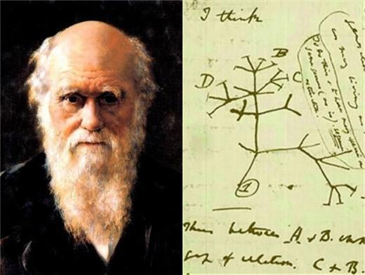 达尔文和他的手稿 查尔斯罗伯特达尔文 变种人可能性: 特殊技能:看穿生物旧态 不排除达尔文是第一个从学术上意识到自己是变种人的生物学家,关于自然选择的理论也成为了一个掩饰变种人存在的合理外衣。达尔文从幼年时期便具有看到生物旧态的能力,而小猎犬号上的旅程更是验证了他对于自己所见的猜测。当然,作为一个保守派,达尔文对于宗教虽然厌恶却心存忌惮,很长时间里他一直不敢发表自己的研究成果。这样的人自然更是了解人们对于异类的排斥与恐惧,所以他并没有提出有关变种人的任何理论。