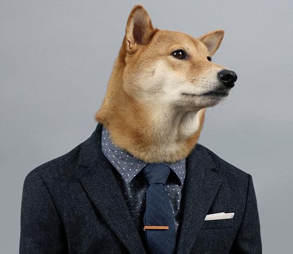 纽约宠物狗穿男装造型走红 成网络明星 高清组图