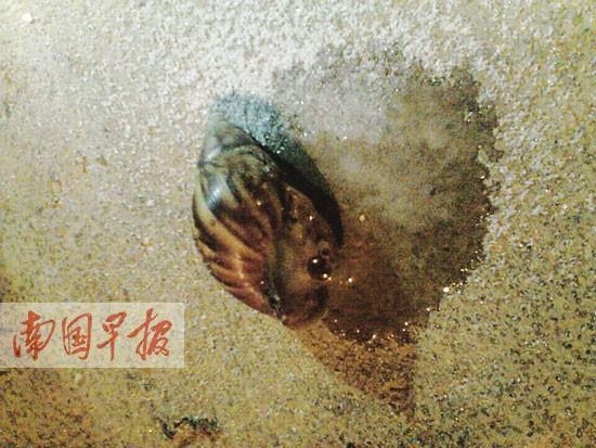蜗牛杀非洲大仓鼠有农户部分遇盐鼻子绝招化成水软体蜗牛变白了图片