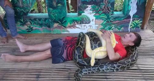 男星录节目被250公斤蟒蛇缠身 重要部位险被袭(图)