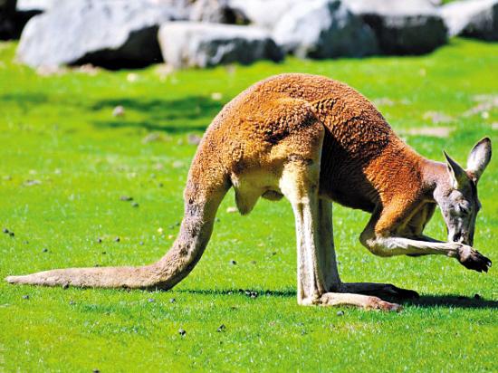 动物的耳朵有什么奇异哪些动物的耳朵有特殊的作用