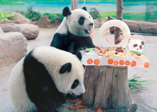 报道说,30日一早,动物园熊猫馆大排长龙,民众把握暑假最后一个周末