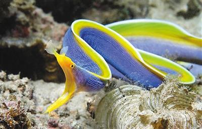 奇妙海洋鱼类图片