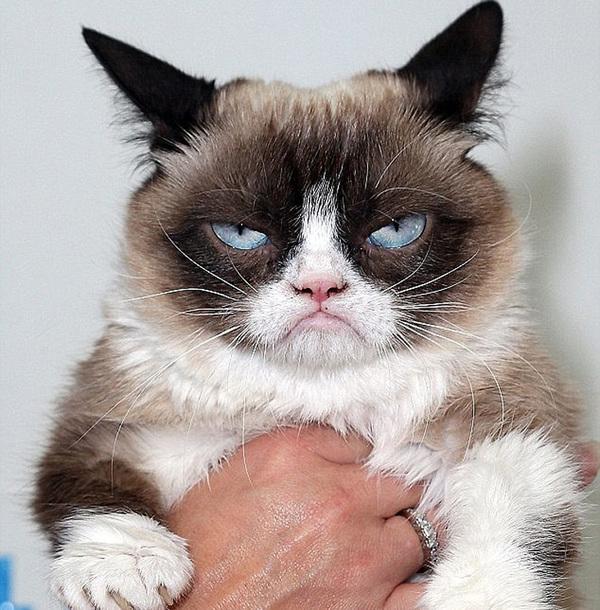 这只11岁的猫咪叫板野(Banye),是一只英国短毛猫,和主人温妮(Winnie)一起住在上海。自从它的主人在图片分享网站堆糖上上传了它的一系列玉照后,板野凭借两只睁得大大的圆眼睛和嘴底下的一抹黑色小胡子迅速走红网络,赢得了一票追随者,当选惊讶猫。