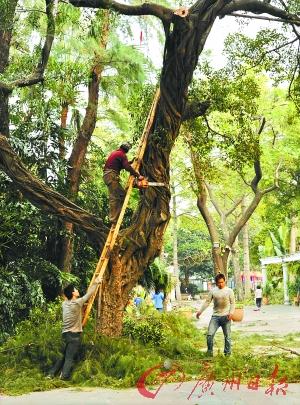复杂大树剪纸步骤图解