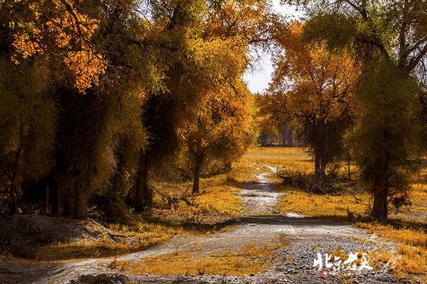 新疆 · 塔里木河畔的金色胡杨 - 高,实在是高 - 高永平:从教语文到研究教语文