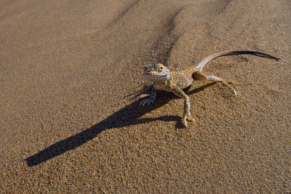 腾格里沙漠生态摄影——动物植物 - 闲云野鹤 - 闲云野鹤的博客