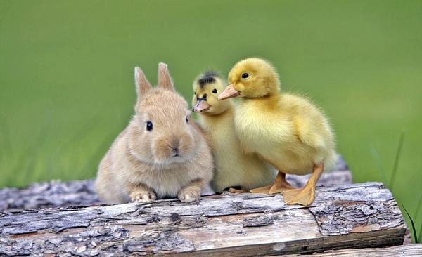 盘点动物界罕见跨物种友谊