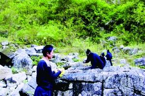 黑叶猴一家下山吃晚餐