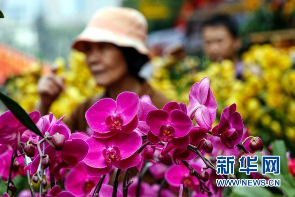 记者走访花卉市场发现,花木的品种结构和销量变化,悄然展示了八项规定
