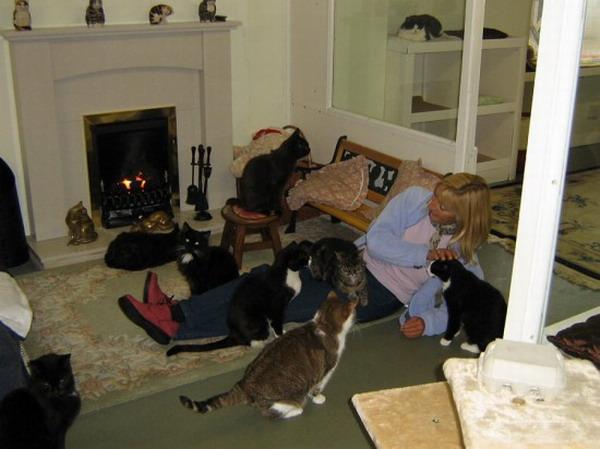 英國開全球首傢貓咪養老院,80隻老貓安享晚年。(網頁截圖)