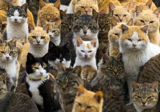 """图为日本""""猫岛""""上的猫咪。来源:路透社。"""