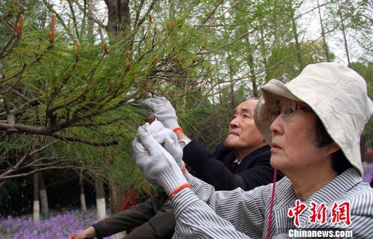 日本日中协会植树访华团到南京植树祈和平|日