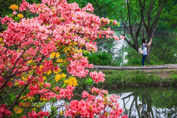西溪湿地以水闻名,景区在游船观赏路线沿岸布置了花艺小品,花岛,嵌花