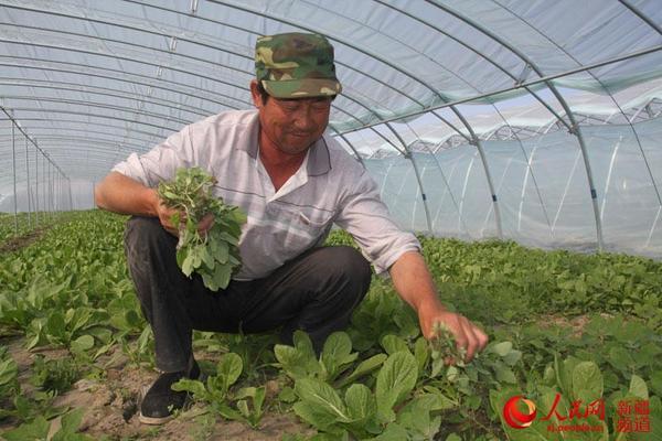 新疆乌苏市产业结构调整促增收(图)